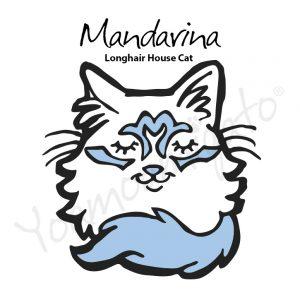 mandarina gata de casa yoamoamigato