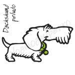 dachshund peludo yoamoamiperro